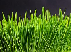 grass-534873__180